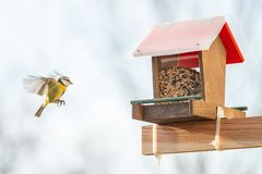 Help for small city birds to survive during winter season with a. Balcony bird feeder royalty free stock photography