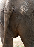 Help Text on Elephant Backside Stock Photography