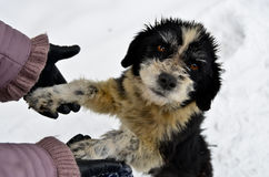 Help to homeless dog. People help to frozen alone homeless dog on the snow royalty free stock images