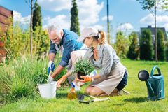 Helpful mature man joining her beautiful wife while grubbing the weeds up. Helpful man. Helpful mature men joining her beautiful wife while grubbing the weeds up stock photos