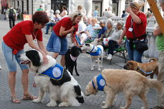 Therapy dogs Helping paws. Slovenian society for therapy using dogs makes presentation of their work and their dogs at International festival Igraj se z mano ( Royalty Free Stock Photography
