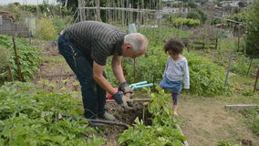 Helping Grandpa on the allotment 2 Royalty Free Stock Images