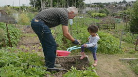 Helping Grandpa on the allotment 3 Stock Photography
