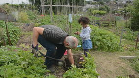 Helping Grandpa on the allotment 1 Stock Image