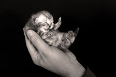 Helping hand for a small kitten Royalty Free Stock Image