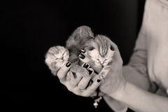 Helping hand for a small kitten Stock Image