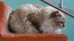 Helping homeless abandoned cats concept. Cute abandoned cat sitting on the steps Royalty Free Stock Photo