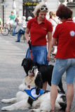 Therapy dogs Helping Paws. Slovenian society for therapy using dogs makes presentation of their work and their dogs at International festival Igraj se z mano (it Royalty Free Stock Photo