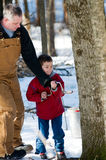 Helping in the sugar bush Stock Photography