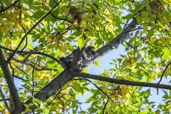 Helpless little kitten sitting on tree branch Stock Photo