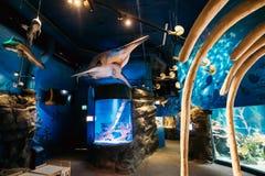 Helsínquia, Finlandia Tubarões modelo de Of Prehistoric Extinct em Oceanarium imagens de stock