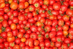 Heltäckandebakgrund för körsbärsröda tomater Royaltyfri Foto