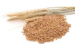Helt korn av vete arkivbild
