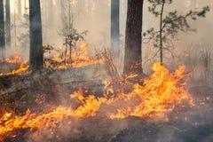 Helt skogområde i brand och som täcker av flamman royaltyfri bild