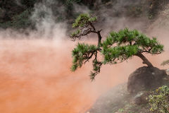 Helvete för den Chinoike-Jigoku blodpölen är en av åtta Beppu som den varma våren turnerar Fotografering för Bildbyråer