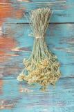 Helychrysum flower, Immortelle flower Stock Images