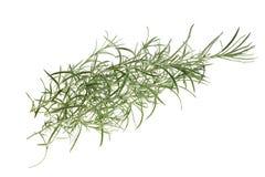 Helychrysum Royalty Free Stock Images
