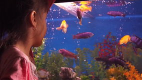 Hem- akvarium med fisken
