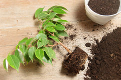 Hem- arbeta i trädgården grön växt Arkivfoton