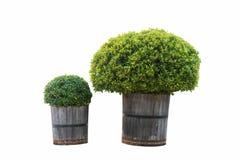 Hem- dekor för trä: Träd som isoleras på vit bakgrund med clippin royaltyfri foto