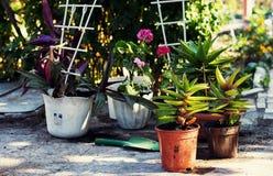 Hem- dekorativ inlagd växt Arkivbild