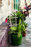Hem- dekorativ inlagd växt Royaltyfri Foto