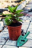 Hem- dekorativ inlagd växt Fotografering för Bildbyråer
