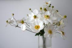 Hem: den vita anemonen blommar den glass vasen Royaltyfri Fotografi
