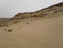 Hem för natur för strandzookrokodil Royaltyfri Foto