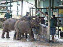 Hem för Udawalawe elefanttransport, Sri Lanka Arkivbilder