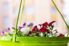 Hem-fullvuxna blommor i en grön kruka arkivbild