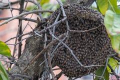 Hem Hive on Branch. Hem hive on the tree Stock Photos