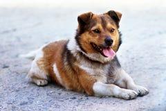 Hem- hund som ligger på trottoaren Arkivbild