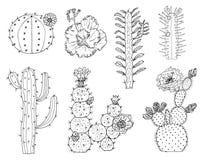 Hem- kaktusväxter och blommor Ställ in av hemtrevliga gulliga beståndsdelar Samling av exotiska eller tropiska suckulenter med tö vektor illustrationer
