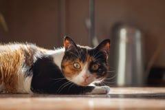 Hem- katt i solen Arkivfoton