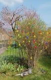 Hem- trädgård med easter buske, färgrika easter ägg och strimmig kattkatt Royaltyfria Foton