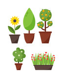 Hem- växt- och trädillustration Royaltyfri Illustrationer