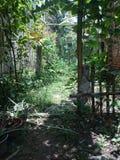 Hem- vaptured kortkortgräsplanträdgård Royaltyfri Fotografi