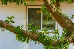 Hem- yttre fönster Fotografering för Bildbyråer