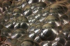 Hematita globular Fotografia de Stock