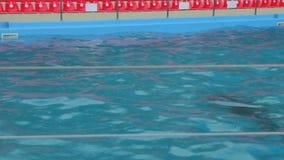 Hembra con el delfín del bebé en la piscina almacen de video