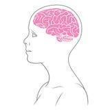 Hembra del color del cerebro Imagen de archivo libre de regalías