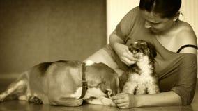 Hembra joven con dos perros preciosos en el piso de la lamina del hogar - blanco negro metrajes