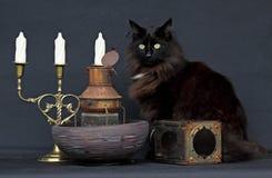 Hembra noruega del gato del bosque con las linternas oxidadas Imagen de archivo libre de regalías
