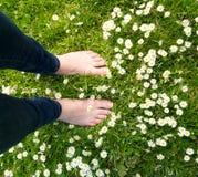 Hembra que se coloca descalzo en hierba verde y flores blancas Imagen de archivo libre de regalías