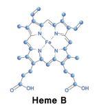Heme B, medical Stock Photos