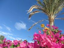 Hemel, bloemen en Palma Royalty-vrije Stock Afbeeldingen