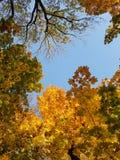 Hemel in de kronen van de herfstbomen royalty-vrije stock foto's
