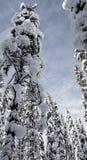 Hemel door de bomen wordt ontworpen - Lapland dat stock foto's
