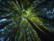 Hemel door mooi bos wordt bekeken dat royalty-vrije stock foto